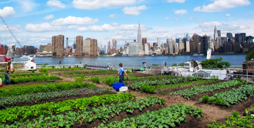 Agricultura urbana: Re-naturalizando la ciudad